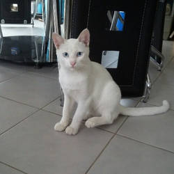 Cay the Puspin by dorkycats