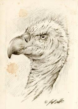 Vulture study