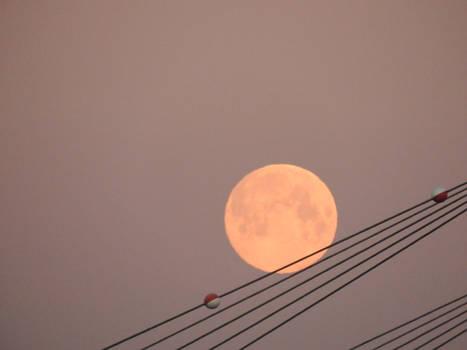 Moon roll