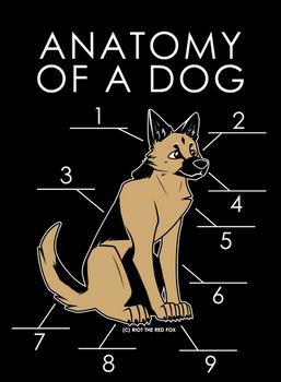 Anatomy Of A Dog (Draft)