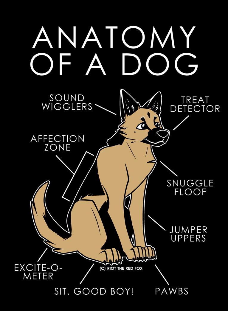 Anatomy Of A Dog By Artwork Tee On Deviantart