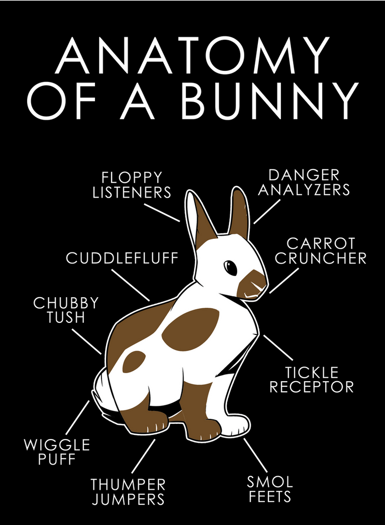 Anatomy Of A Bunny by artwork-tee on DeviantArt