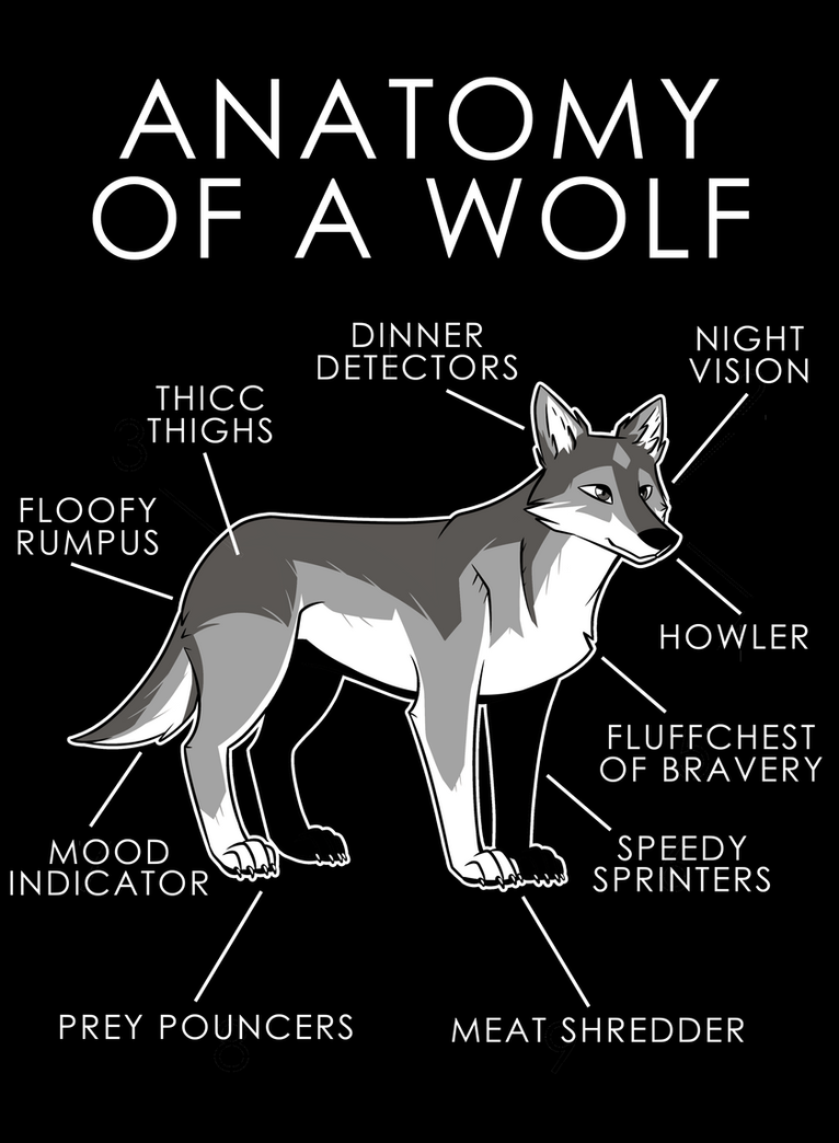 Anatomy of a Wolf by artwork-tee on DeviantArt
