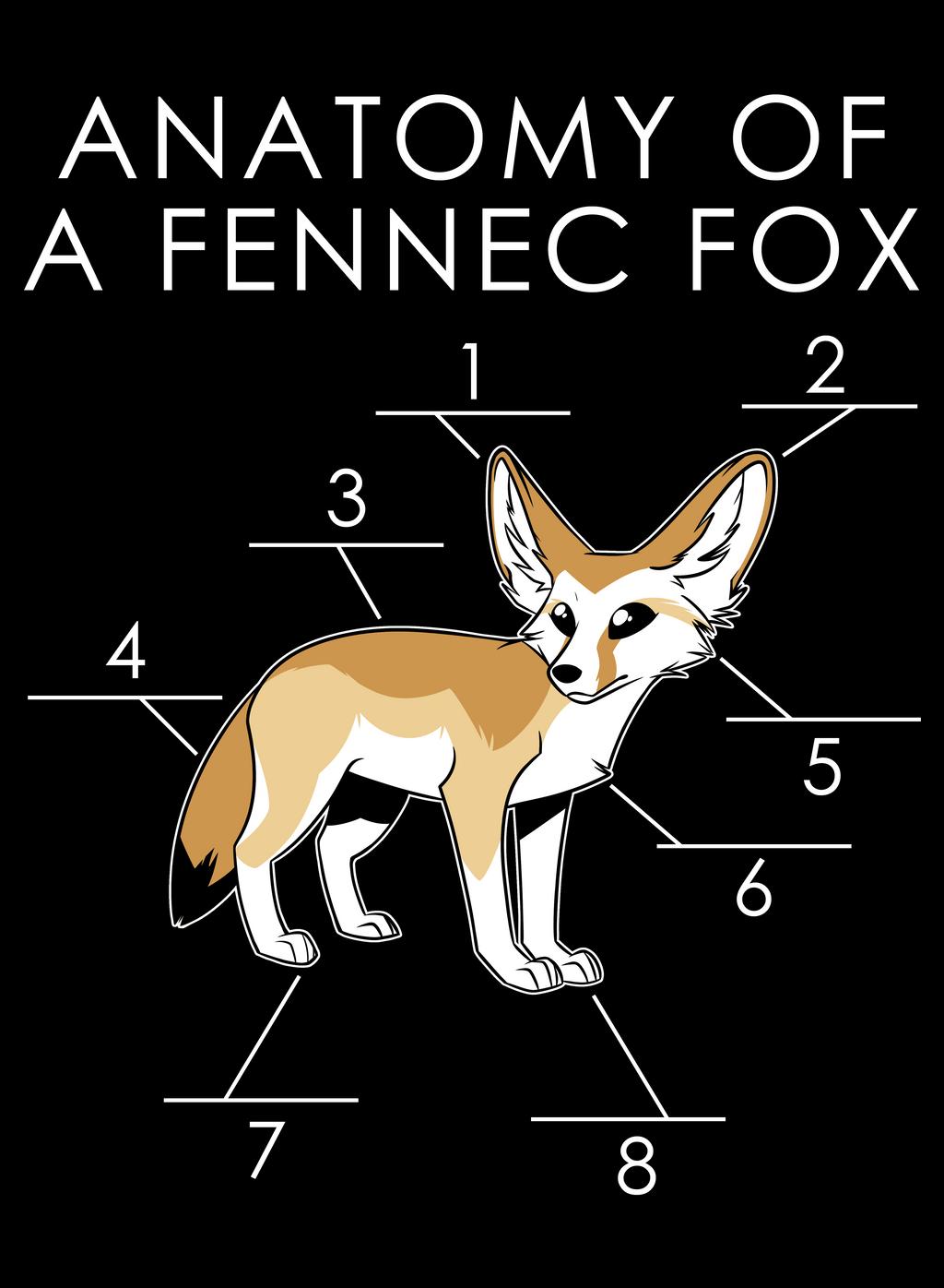 Anatomy of a Fennec Fox by artwork-tee