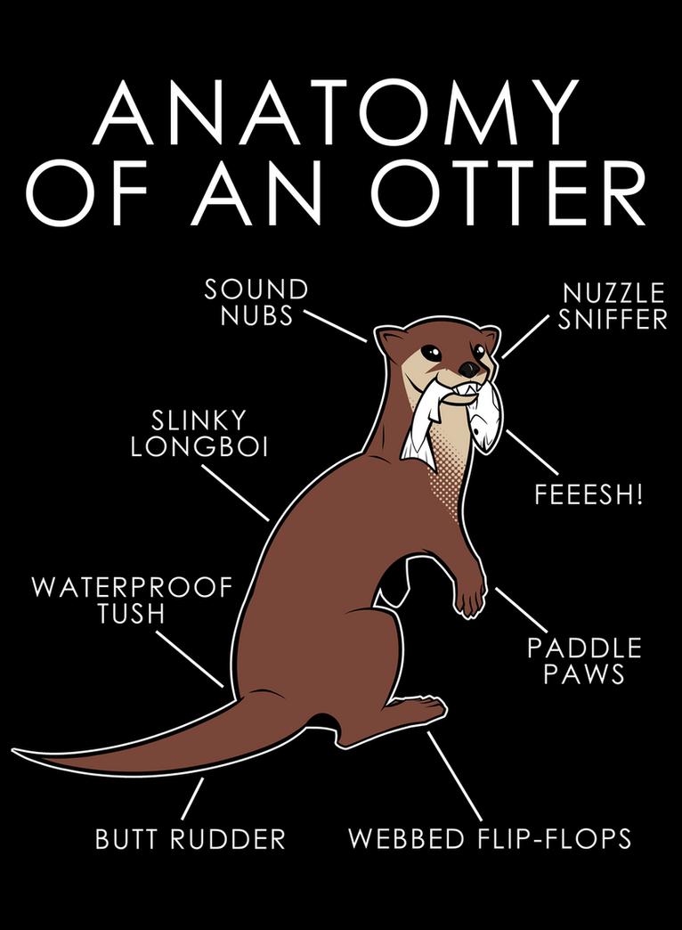 Anatomy of an Otter by artwork-tee on DeviantArt