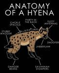 Anatomy of a Hyena