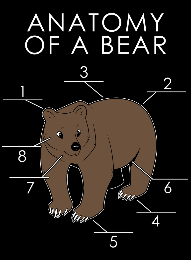 Anatomy of a Bear by artwork-tee on DeviantArt