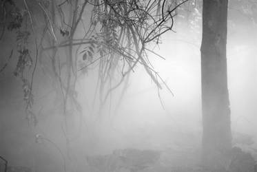 Into the Foggy Woods