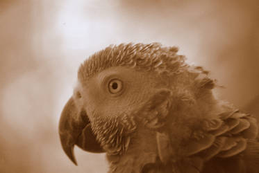 The Parrot