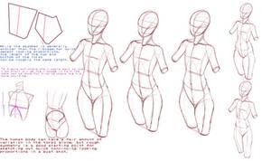 Female Torso Proportions by Ecchi-Senshi