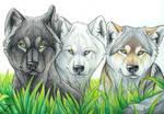 Larka, Fell and Kar