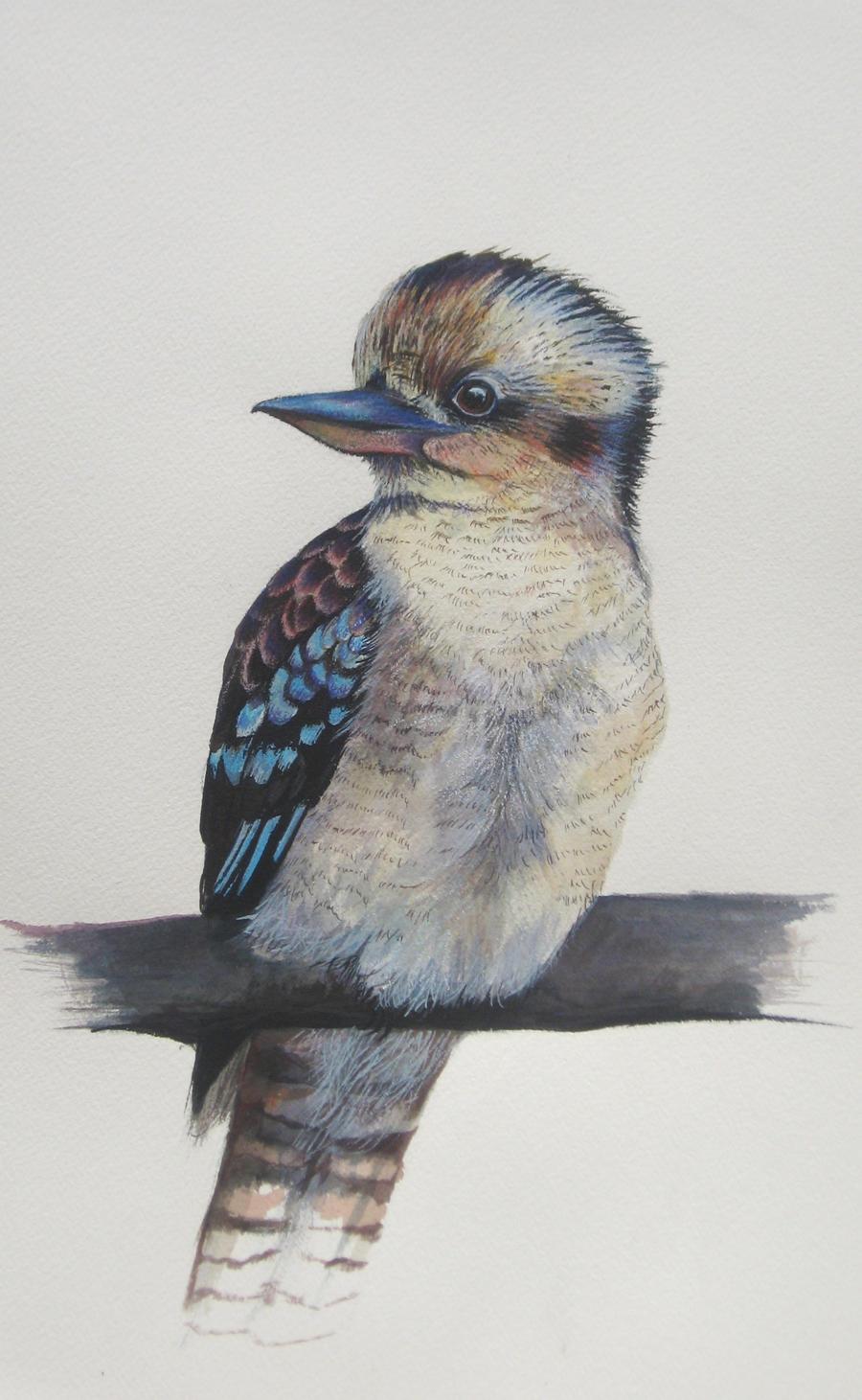 Kookaburra by JoanneBarby