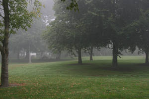 Foggy Day by ThePurpleYard-Stock