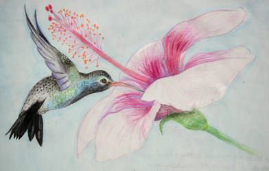 Hummingbird And Hibiscus by lorahh