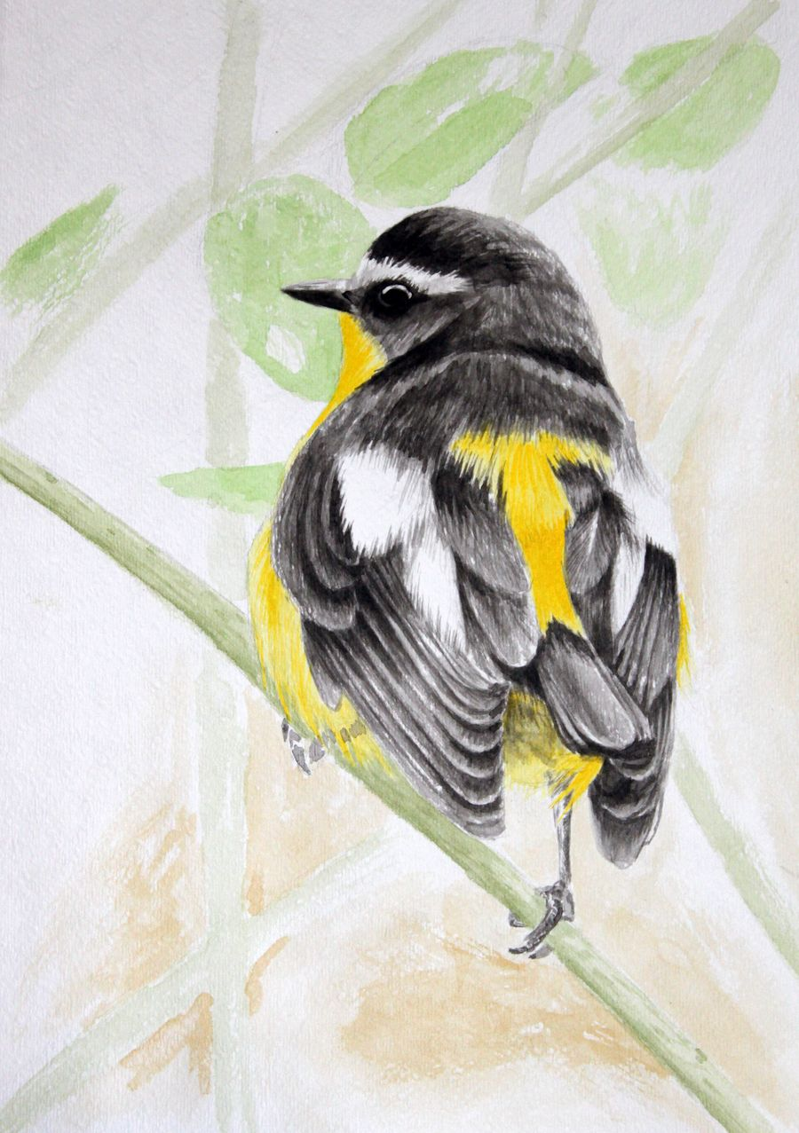 Bird in ink by dimasbka