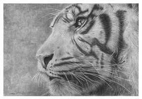 Portrait of a tiger by dimasbka