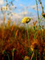 A World of Tiny Suns by noirwhisper