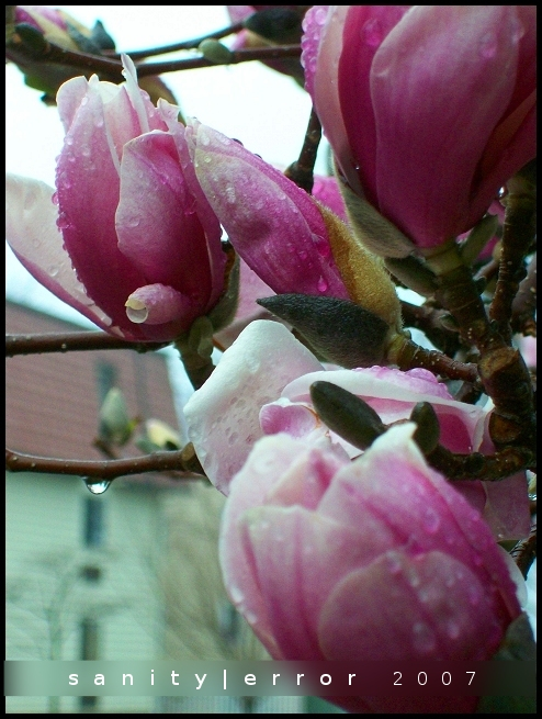 First Flowers of Spring -4-