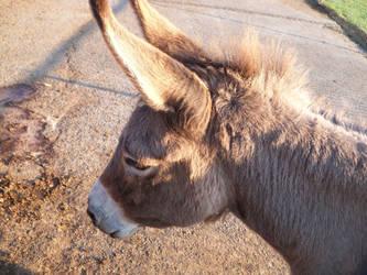 It's a donkey by wheretearsrunblack