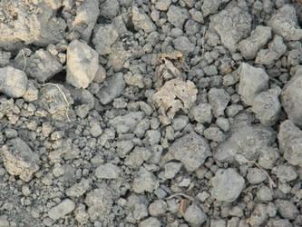 Dirt by Taradaciuc