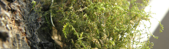 Moss Crop by Taradaciuc