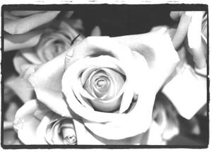 Final Project: Grocery Rose