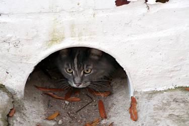 Frank's Cat