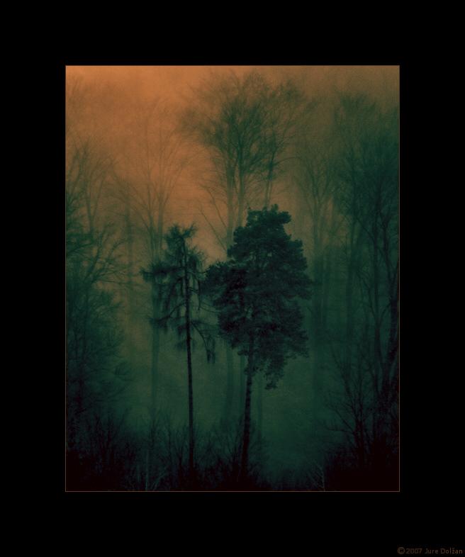 Softwoodsland by PancolartJorge