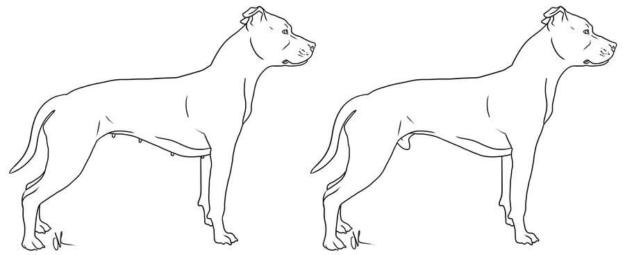 Pitbull Drawings With Wings
