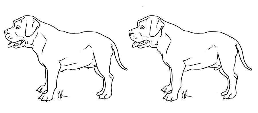outline pit bull paper See some great examples of easy bull drawings along with an outline which makes marks on your paper to indicate the outline of a bull and see.