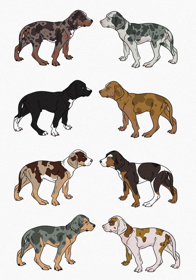 Catahoula Leopard Dog Colors | myideasbedroom.com