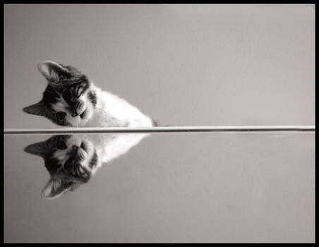 mirrored cat