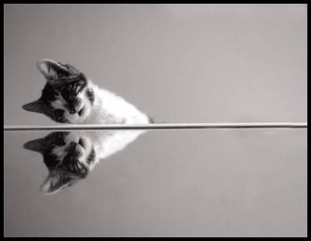 mirrored cat