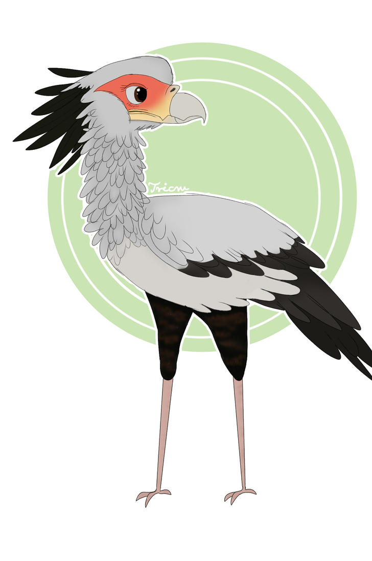 Secretary Bird by Tricru