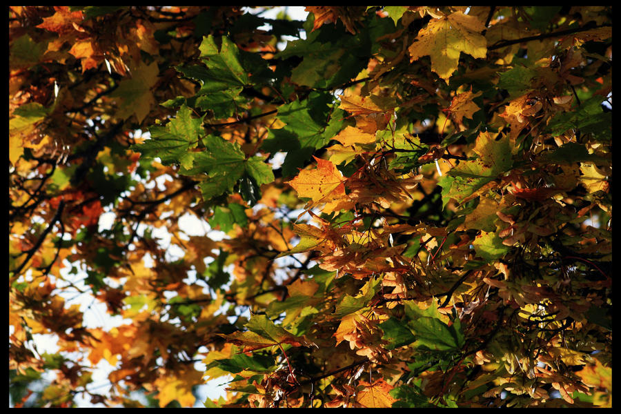 One thousand autumn leaves by nightwibe