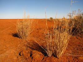 Outback Grass by Obie-06