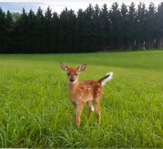 Little-deer01 by HamburdeerPLZ
