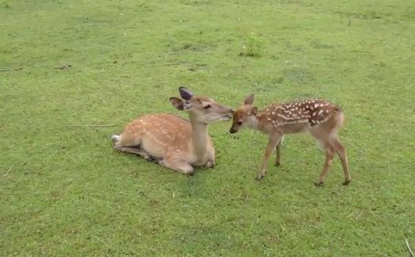 Little-deer02 n mother by HamburdeerPLZ