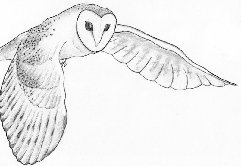 White Barn Owl Drawing