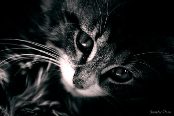 kitten by JenniferHavn