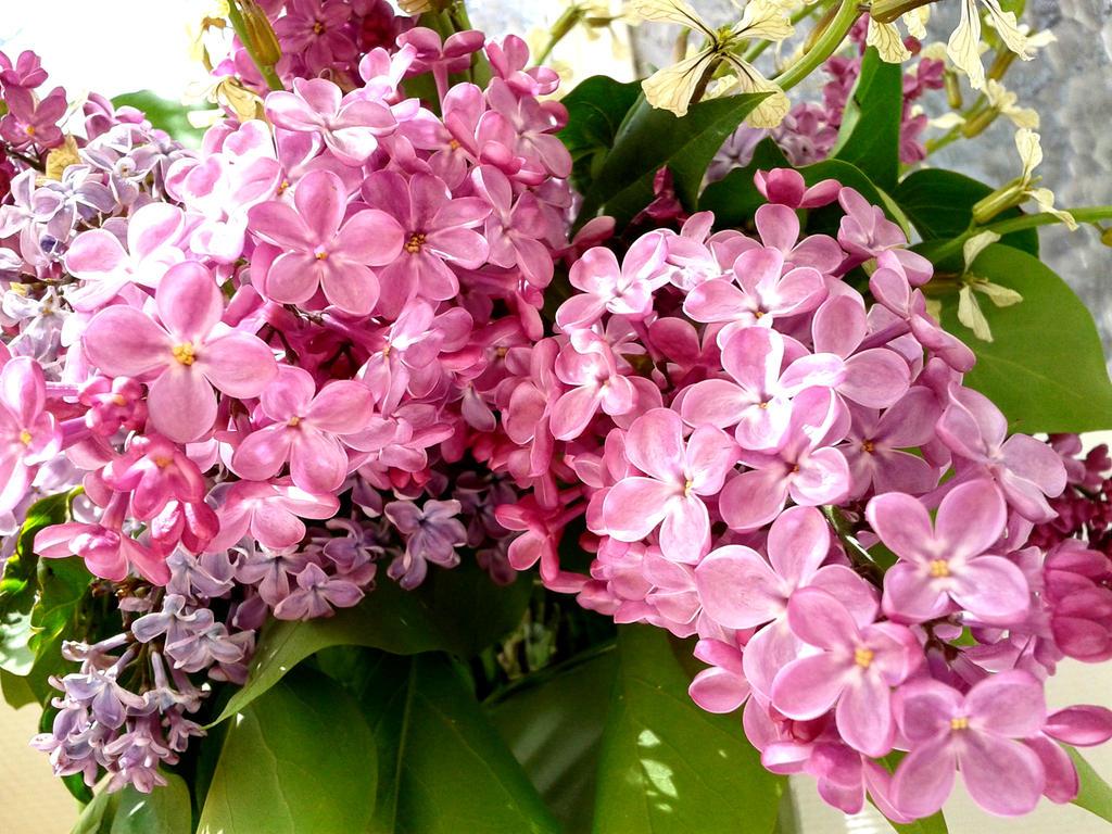 ramo de lilas y flores silvestres ii by susanagh