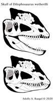 Skull of dilophosaurus 2020 skeletal drawing