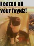 My Own LOL Cat