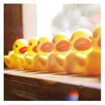 duckies .