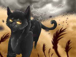 Windclan's Storm by WoofyDragon