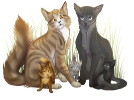 Leafpool X Crowfeather by WoofyDragon