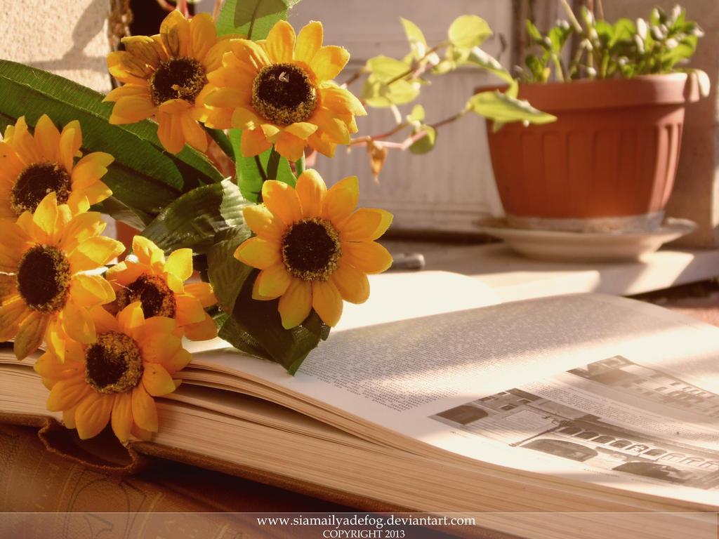 Reading under the Sun by SiamailyaDeFog