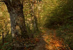 Forest Pathway III
