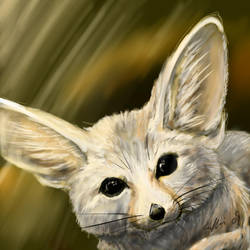 Fennec Fox by SilverFlight