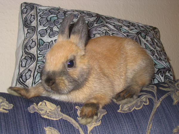 Rabbit 0002 by 0readytofall0